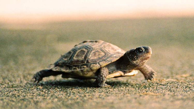 Quote of the Week: Slow and Steady