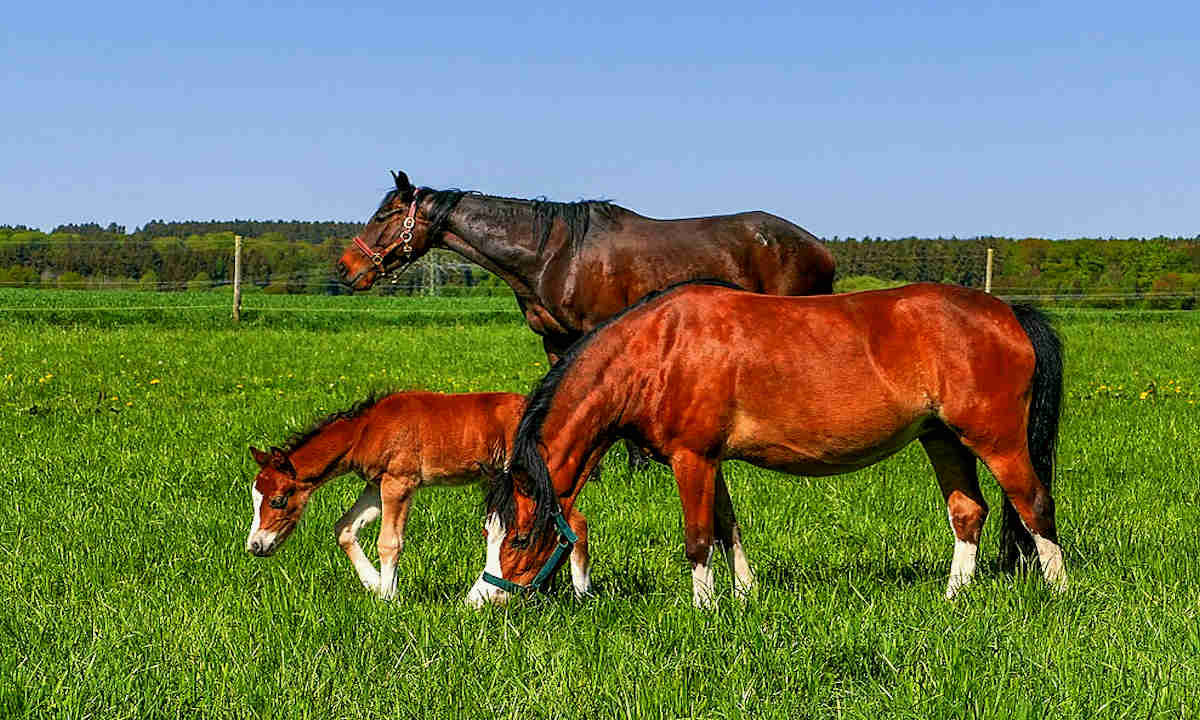 Grazing Management by Species: Horses