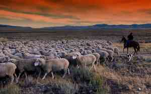 A Guide to Herding by Livestock Species