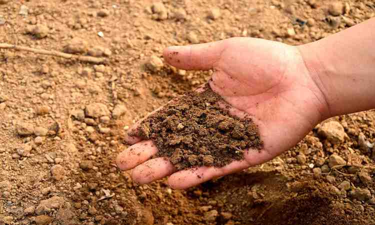 Soil Quick Start