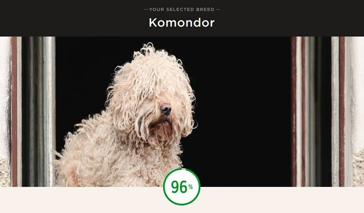 Iams Dog Breed Selector Tool