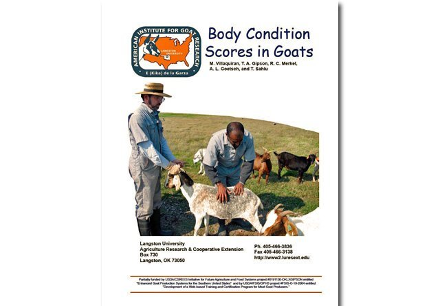 Body Condition Scores in Goats