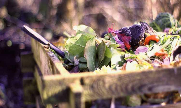 Composting Quick Start