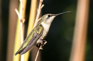 6 Great Birdwatching Resources...and a Bonus!
