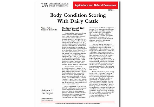 Body Condition Scoring With Dairy Cattle