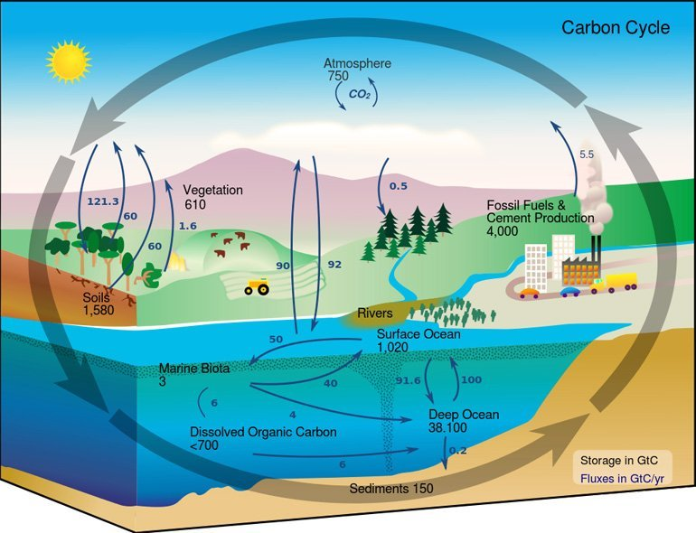 How the Carbon Cycle Works