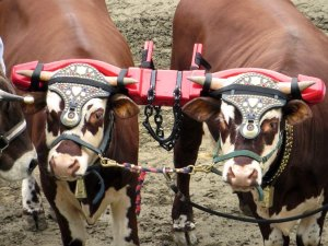 3 Types of Yoke and a Collar