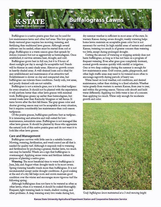 Buffalograss Lawns
