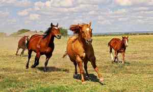 10 Animal Breeds Important to American History