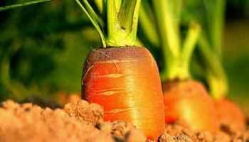 Step 5: Harvest Nutrient-Rich Food