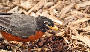 3 Reasons to Mulch Your Garden