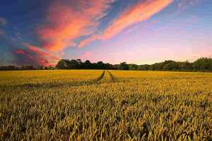 Organic, Sustainable, Regenerative: What's the Difference?