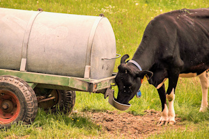 Getting Started with Livestock Part 1: Water