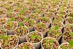 How to Test Seed Germination Rates
