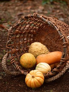 Squash (Winter & Pumpkin)