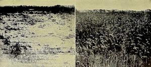 Phosphorus in Plants
