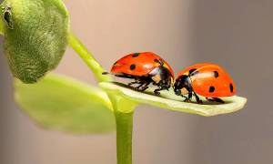 Insects as Indicator Species in Gardens