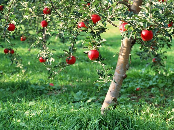 Starting a Garden or Orchard: Location