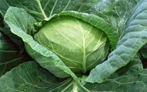 Cornell Vegetable Disease Fact Sheets