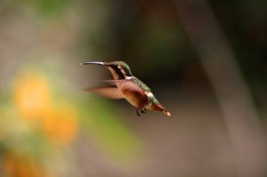 The Two Easiest Ways to Attract Hummingbirds