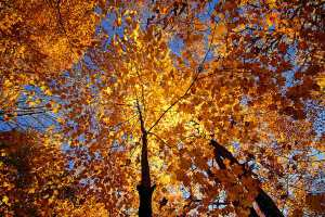Scripture Passages of the Month: October 2014