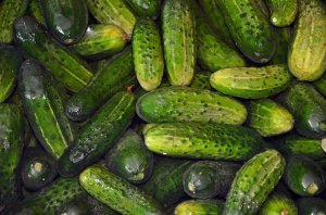 What Makes Some Cucumbers Bitter?