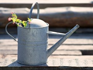 Starting a Garden or Orchard: Water