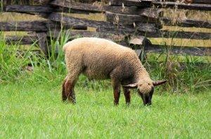 What Causes Wool Allergies?