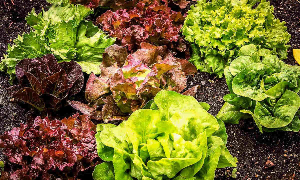 10 Tips for Avoiding Most Garden Diseases