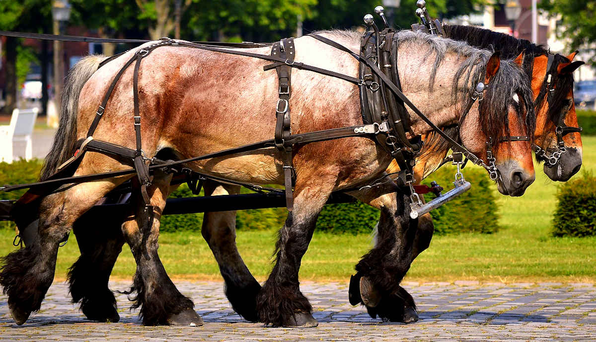 Which Draft Animal is Best for You?: Horses