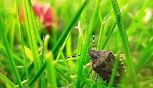 Manual Pest Control