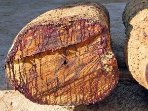 Rosewood: Southeast Asian, Amazonian & Honduran