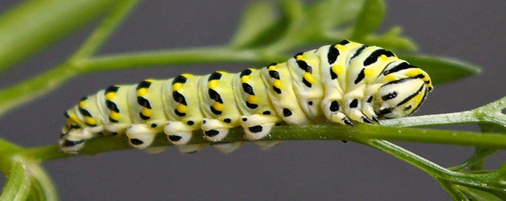 5 Tips for Deterring Garden Bugs