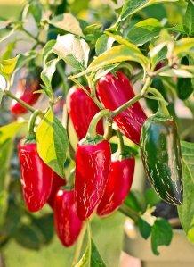 Top 10 Plants for Beginnign Kitchen Gardeners