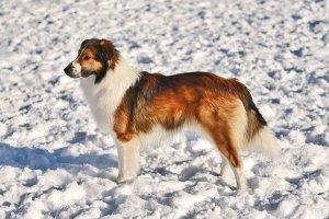Top 10 Reader-Favorite Dog Breeds