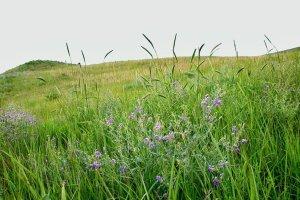 Tallgrass and Shortgrass