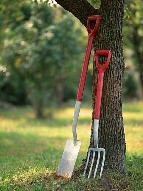 Starting a Garden or Orchard