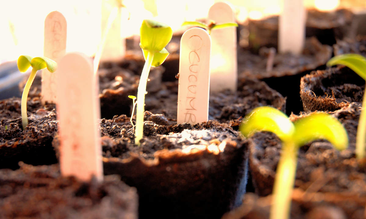 3 Keys to Successful Transplanting