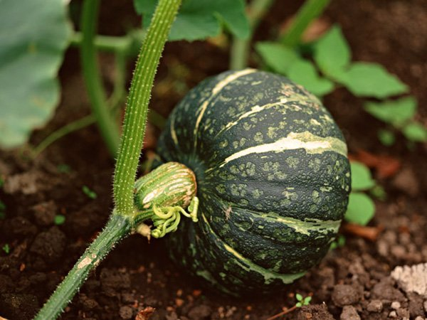 What are Heirloom Plants?