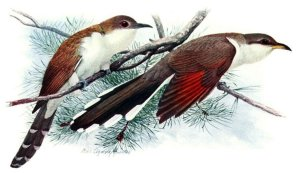 Weather Folklore: Animal Prognosticators