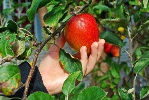 Garden & Orchard Diseases