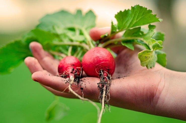 Basic Principles of Breeding Heirloom Vegetables