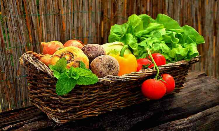 Top 10 Gardening Resources