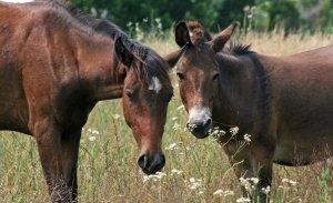 The Breeding Toolbox: Crossbreeding