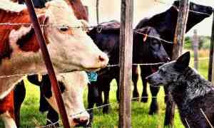 Top 10 Farming Resources