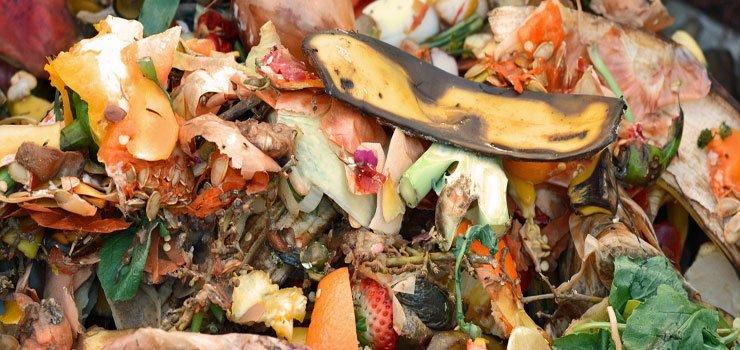C:N Ratios of Common Organic Materials