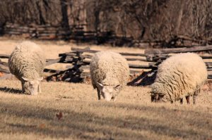The Breeding Toolbox: Inbreeding