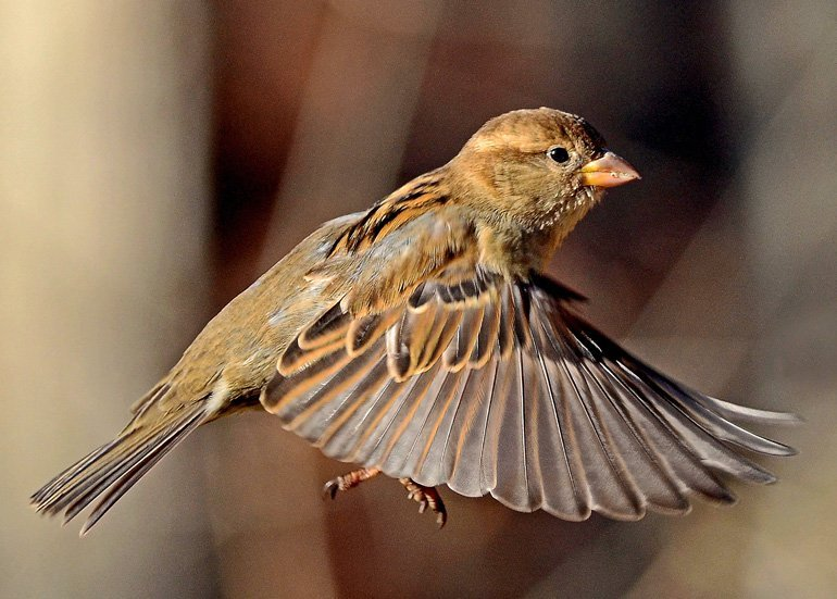 5 Steps to Birdwatching Expertise