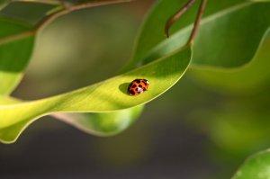 K-State Horticulture Newsletter