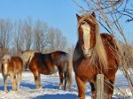 Horse & Donkey Breeds